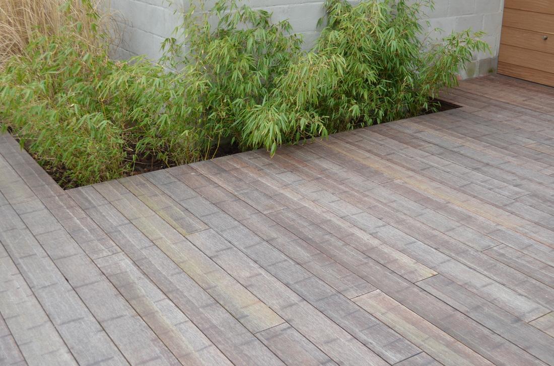 Bamboo - Bamboe in bakken terras ...